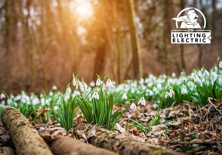 Spring Cleaning For Your Yard: Tips From Our Handyman Service Experts