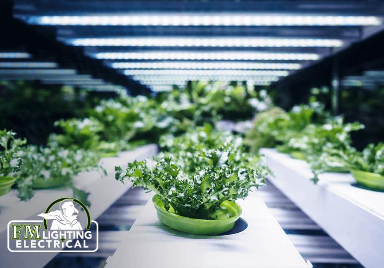 LED Lighting Vs Fluorescent Lighting For Plants